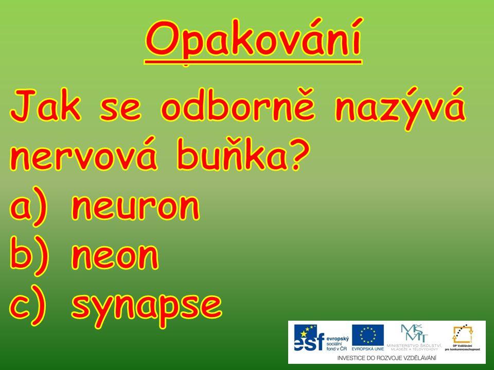 Opakování Jak se odborně nazývá nervová buňka neuron neon synapse