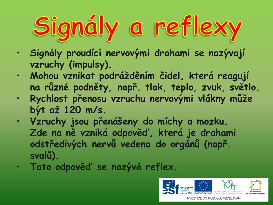 Signály a reflexy Signály proudící nervovými drahami se nazývají vzruchy (impulsy).