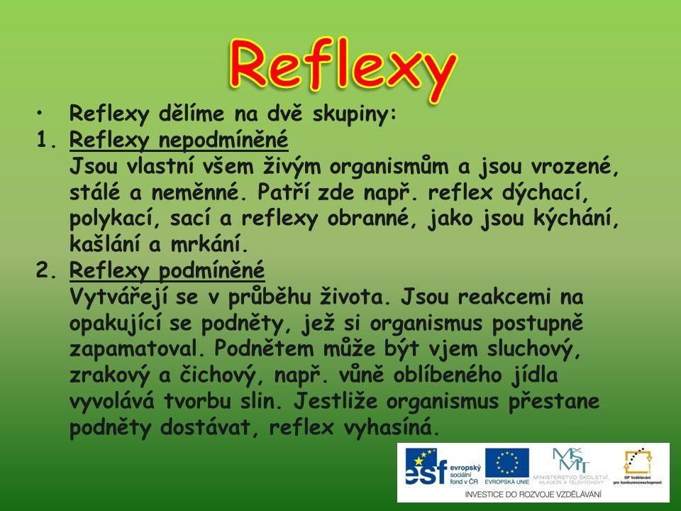 Reflexy Reflexy dělíme na dvě skupiny: