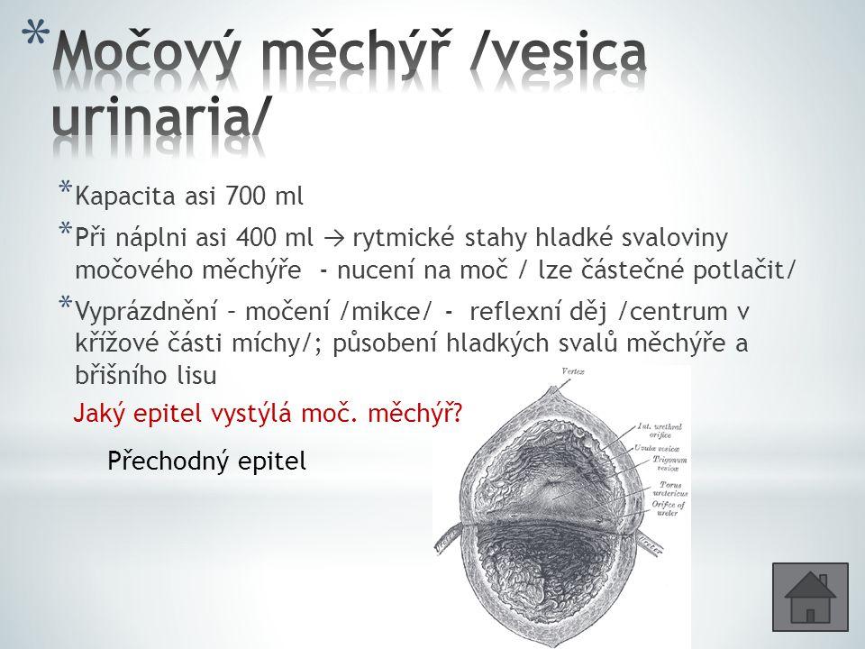 Močový měchýř /vesica urinaria/