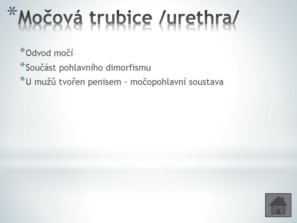 Močová trubice /urethra/