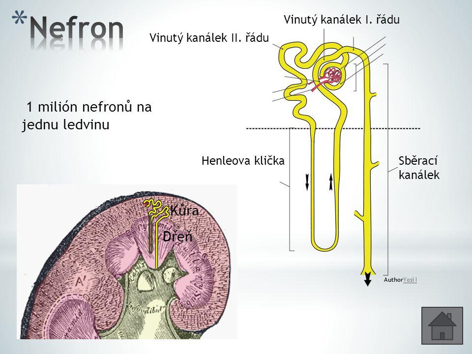 Nefron 1 milión nefronů na jednu ledvinu Kůra Dřeň