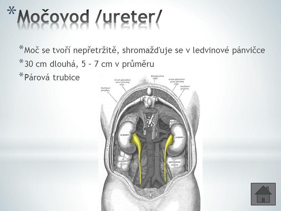 Močovod /ureter/ Moč se tvoří nepřetržitě, shromažďuje se v ledvinové pánvičce. 30 cm dlouhá, 5 – 7 cm v průměru.