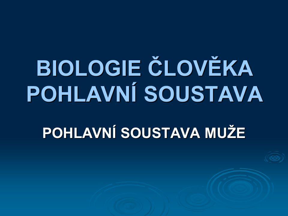 BIOLOGIE ČLOVĚKA POHLAVNÍ SOUSTAVA