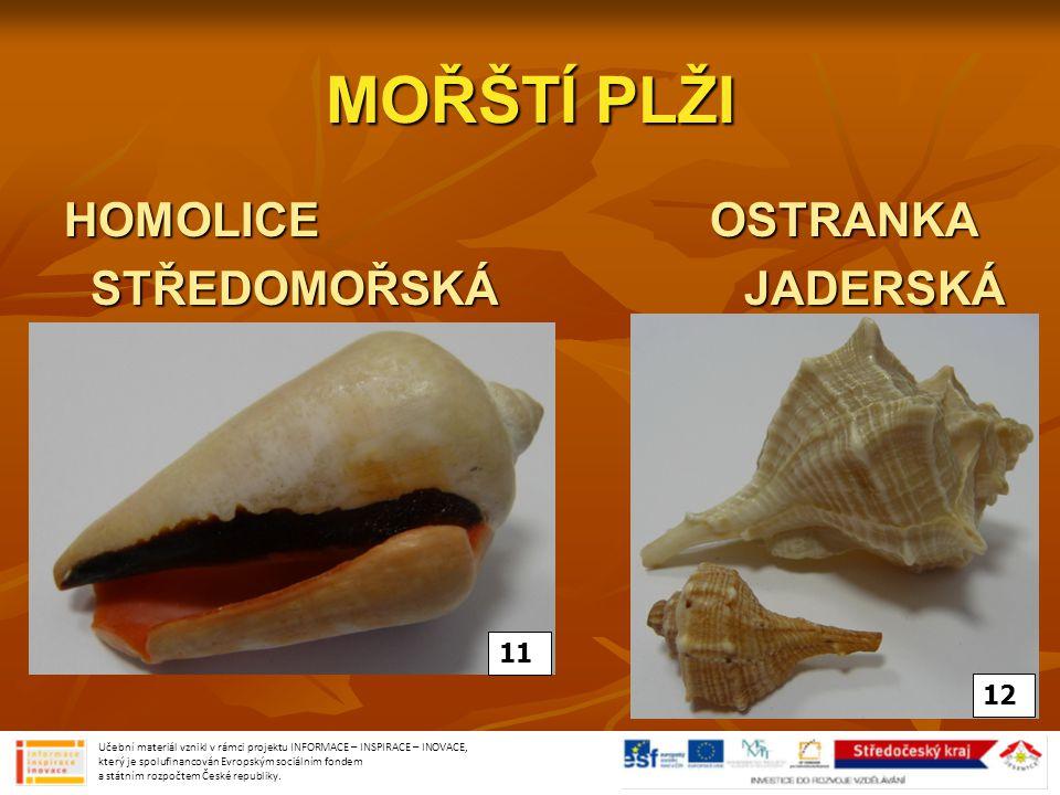 MOŘŠTÍ PLŽI HOMOLICE OSTRANKA STŘEDOMOŘSKÁ JADERSKÁ 11 12