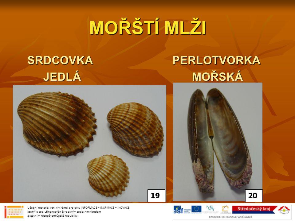 MOŘŠTÍ MLŽI SRDCOVKA PERLOTVORKA JEDLÁ MOŘSKÁ 19 20