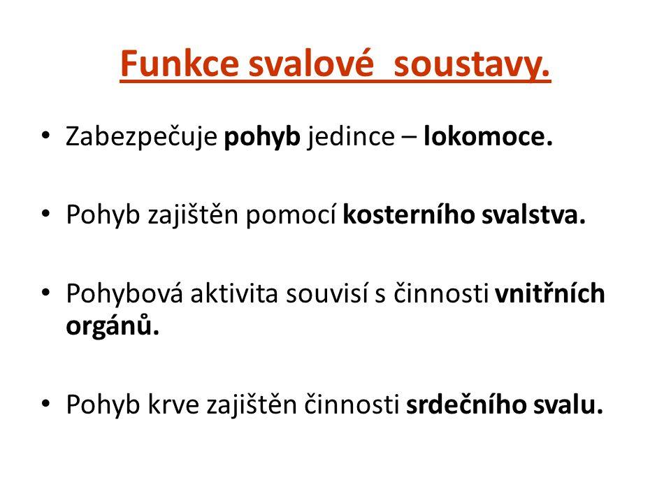 Funkce svalové soustavy.