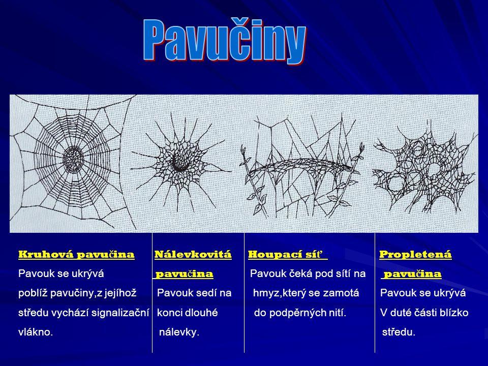 Pavučiny Kruhová pavučina Nálevkovitá Houpací síť Propletená