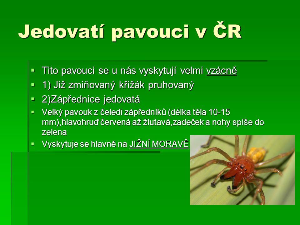 Jedovatí pavouci v ČR Tito pavouci se u nás vyskytují velmi vzácně