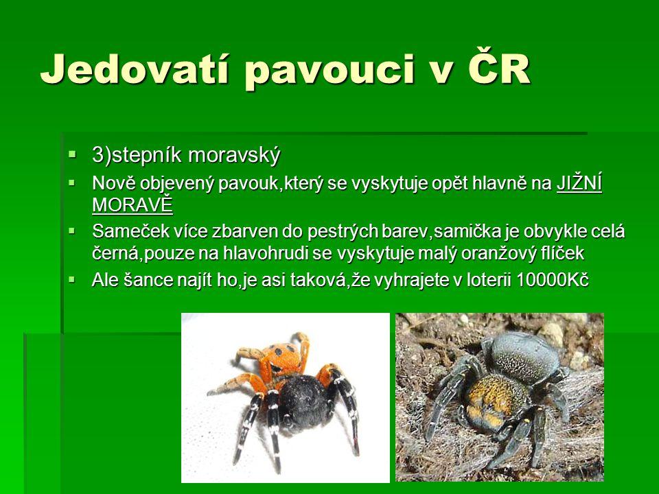 Jedovatí pavouci v ČR 3)stepník moravský