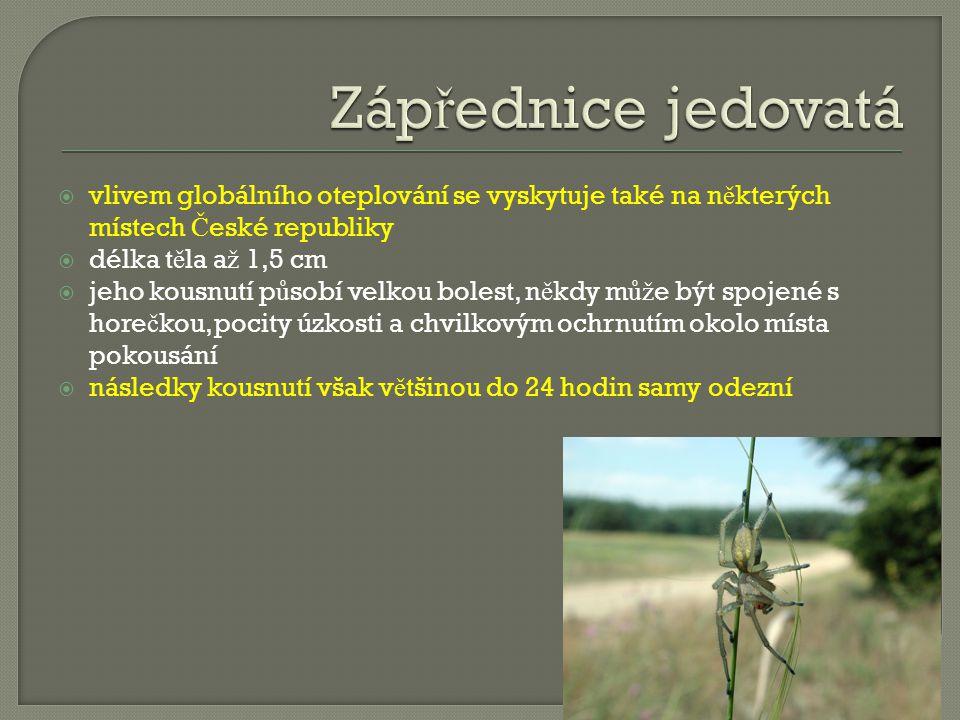 Zápřednice jedovatá vlivem globálního oteplování se vyskytuje také na některých místech České republiky.