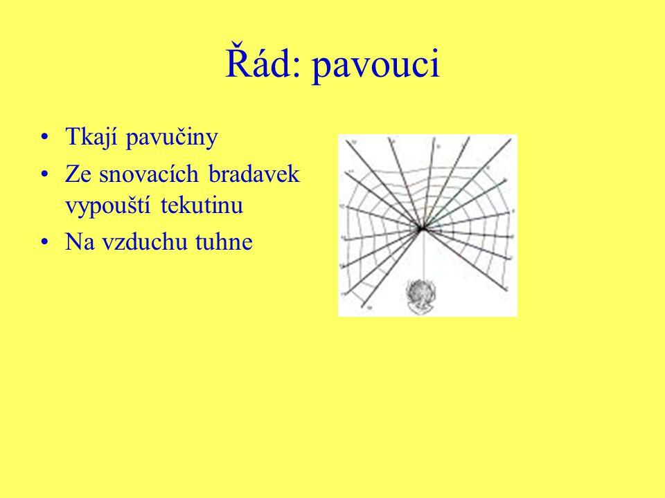 Řád: pavouci Tkají pavučiny Ze snovacích bradavek vypouští tekutinu
