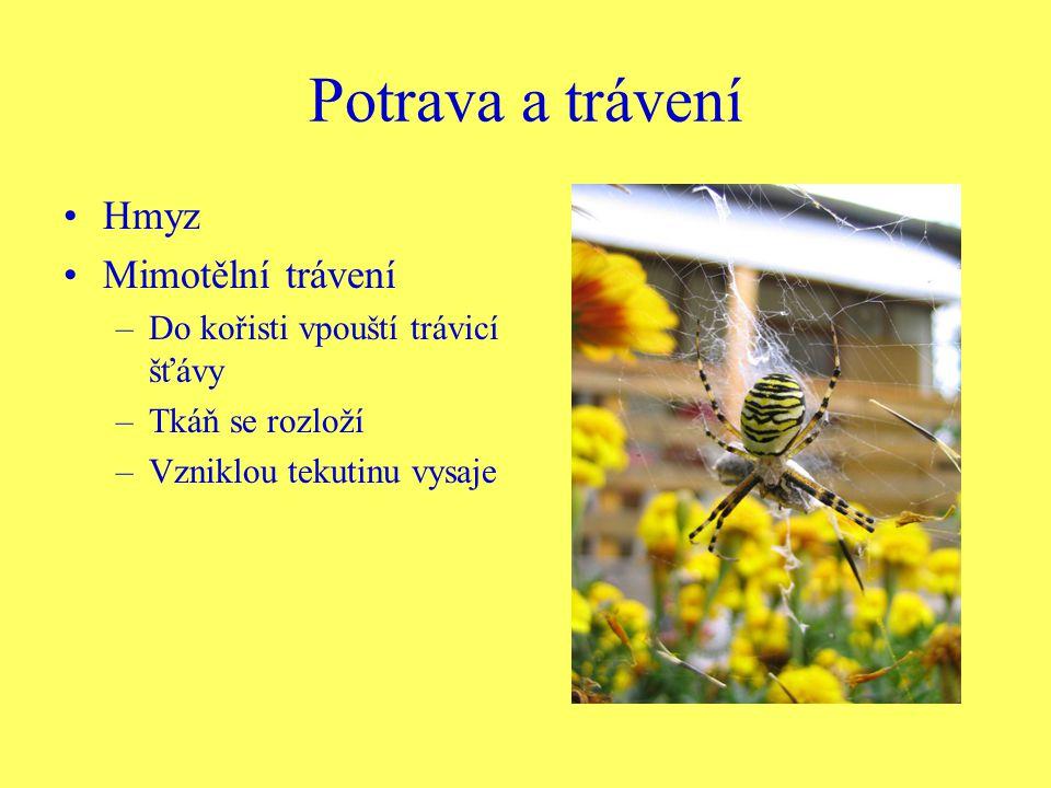 Potrava a trávení Hmyz Mimotělní trávení