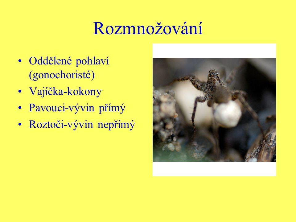 Rozmnožování Oddělené pohlaví (gonochoristé) Vajíčka-kokony