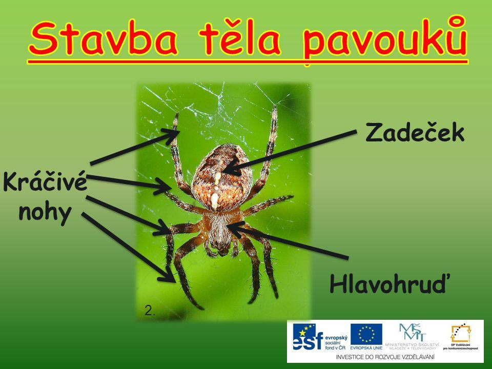 Stavba těla pavouků Zadeček Kráčivé nohy Hlavohruď 2.