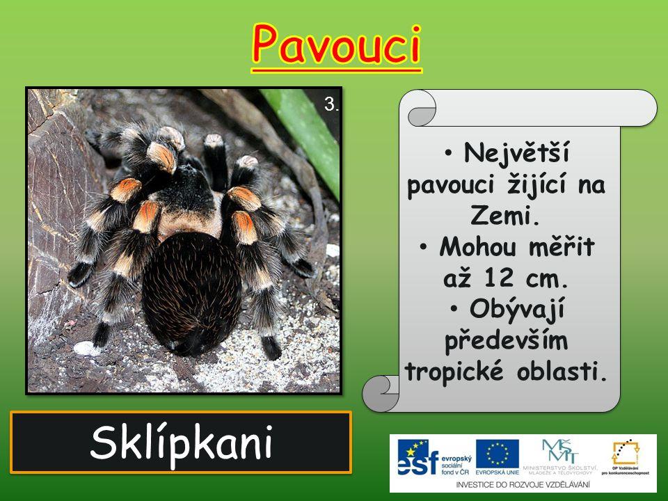 Největší pavouci žijící na Zemi. Obývají především tropické oblasti.