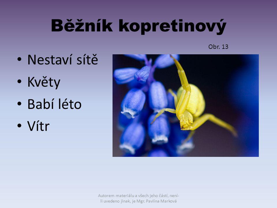 Běžník kopretinový Nestaví sítě Květy Babí léto Vítr Obr. 13