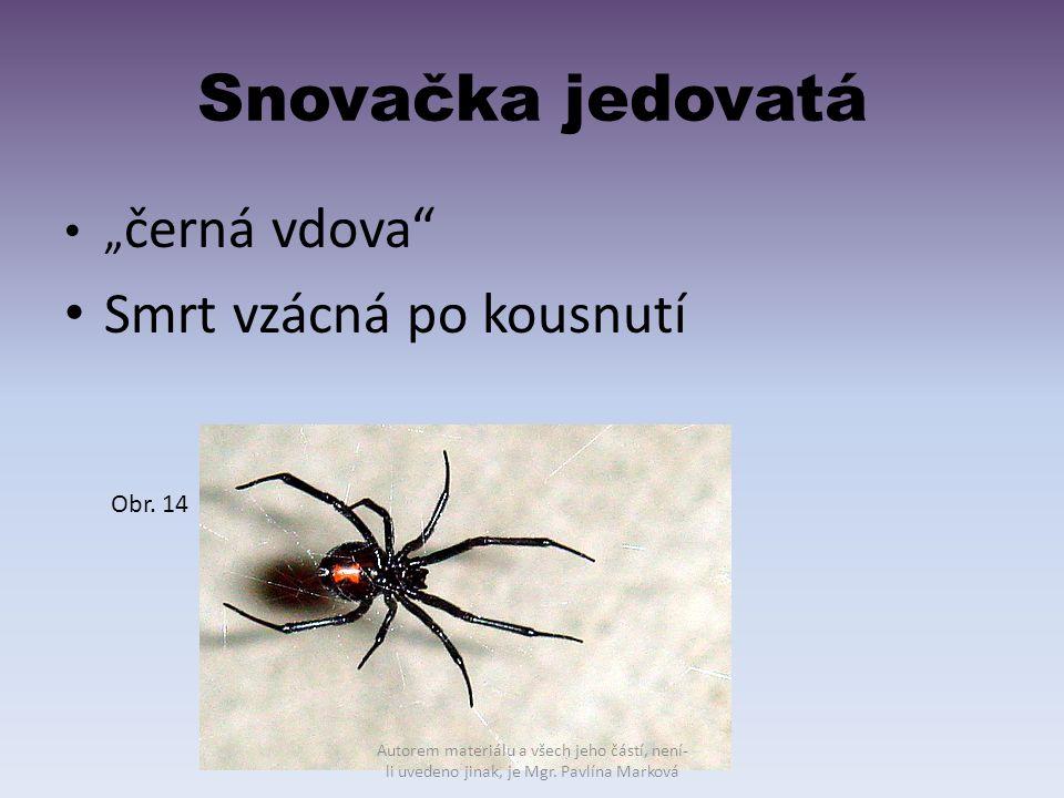 """Snovačka jedovatá Smrt vzácná po kousnutí """"černá vdova Obr. 14"""