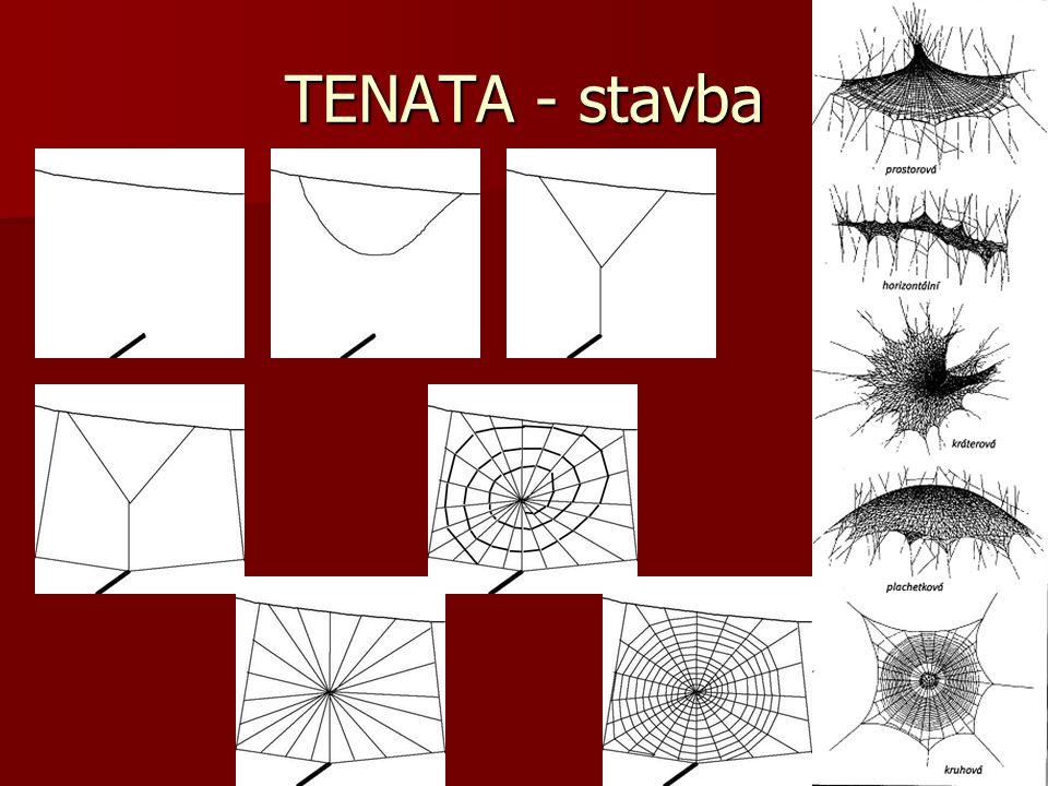 TENATA - stavba