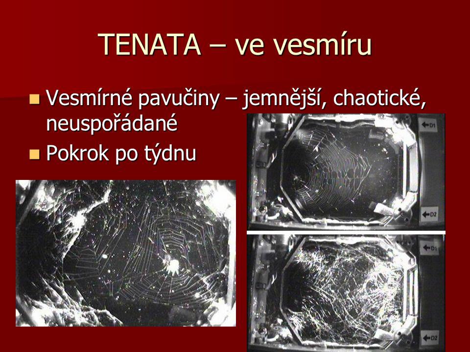 TENATA – ve vesmíru Vesmírné pavučiny – jemnější, chaotické, neuspořádané Pokrok po týdnu