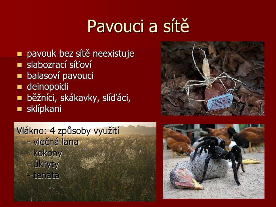Pavouci a sítě pavouk bez sítě neexistuje slabozrací síťoví