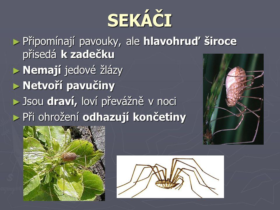 SEKÁČI Připomínají pavouky, ale hlavohruď široce přisedá k zadečku