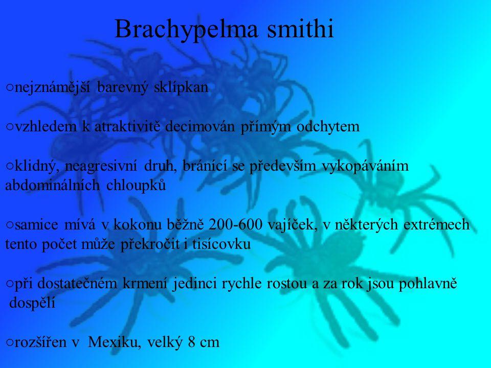 Brachypelma smithi ○nejznámější barevný sklípkan