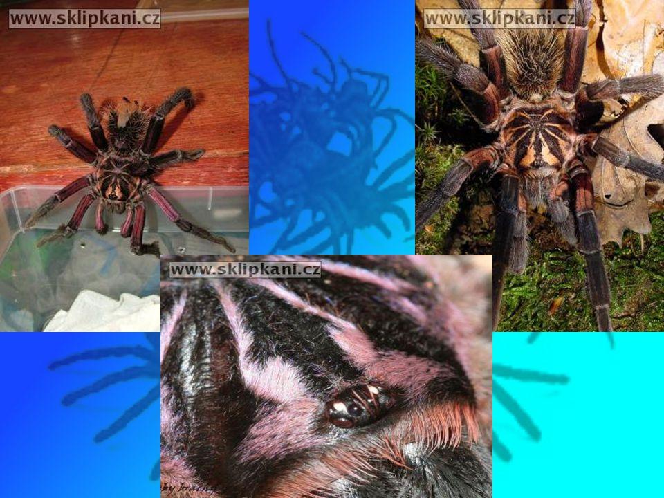 Psycho (2008-05-12, 21:19:04, mail ) Odpovědět