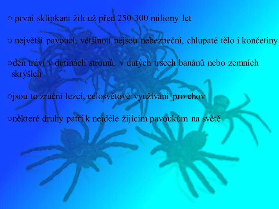 ○ první sklípkani žili už před 250-300 miliony let