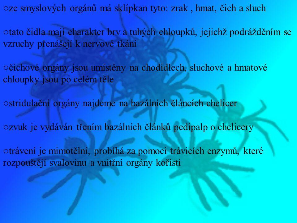 ○ze smyslových orgánů má sklípkan tyto: zrak , hmat, čich a sluch