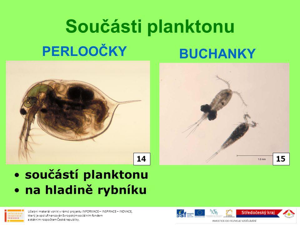 Součásti planktonu PERLOOČKY BUCHANKY součástí planktonu