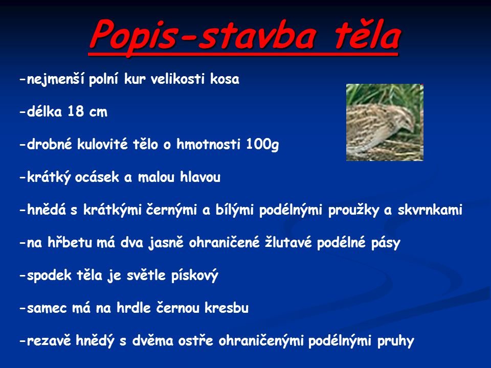 Popis-stavba těla -nejmenší polní kur velikosti kosa -délka 18 cm