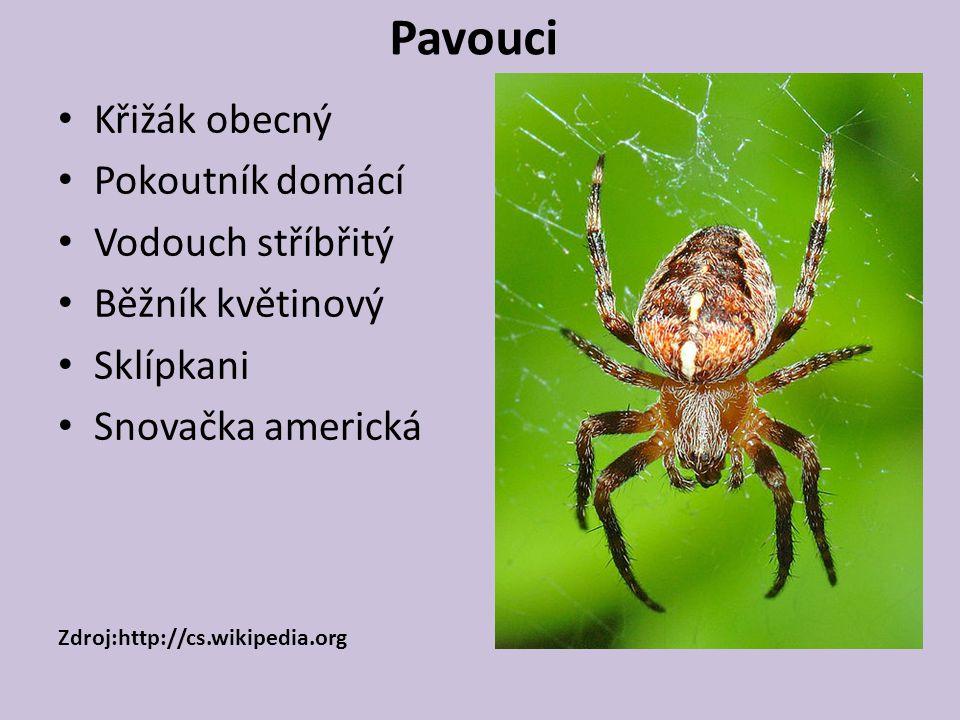 Pavouci Křižák obecný Pokoutník domácí Vodouch stříbřitý