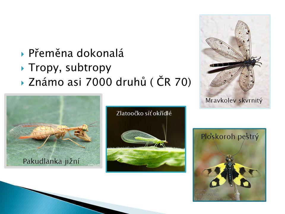 Přeměna dokonalá Tropy, subtropy Známo asi 7000 druhů ( ČR 70)