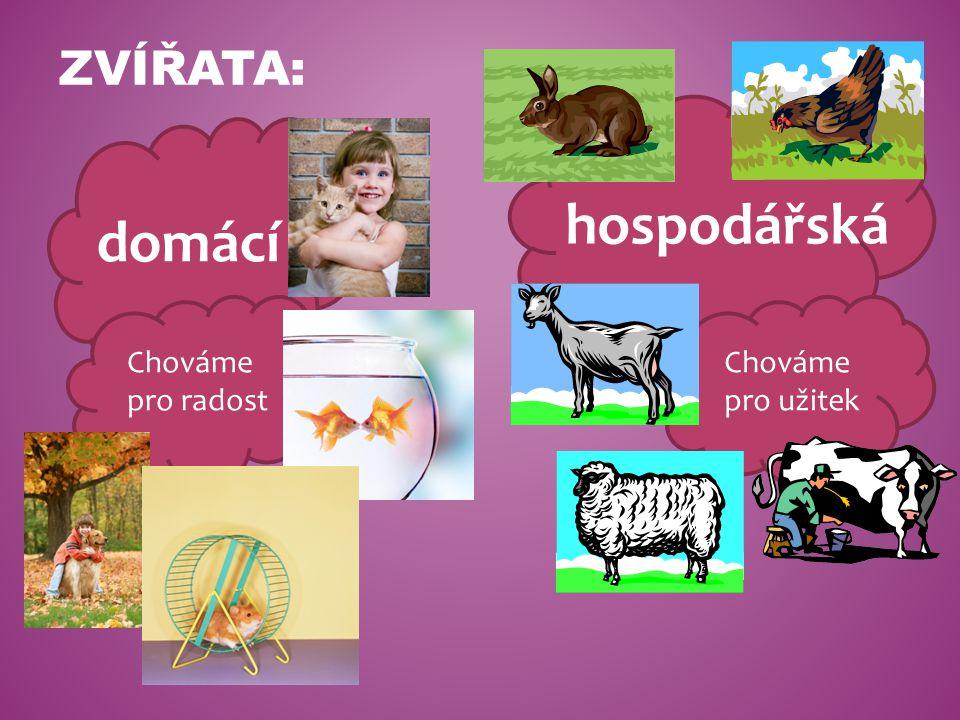 Zvířata: hospodářská domácí Chováme pro radost Chováme pro užitek