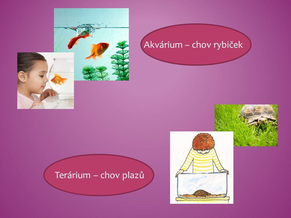 Akvárium – chov rybiček