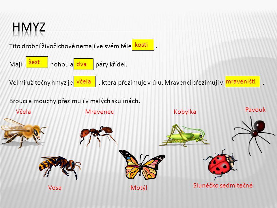 hmyz kosti.