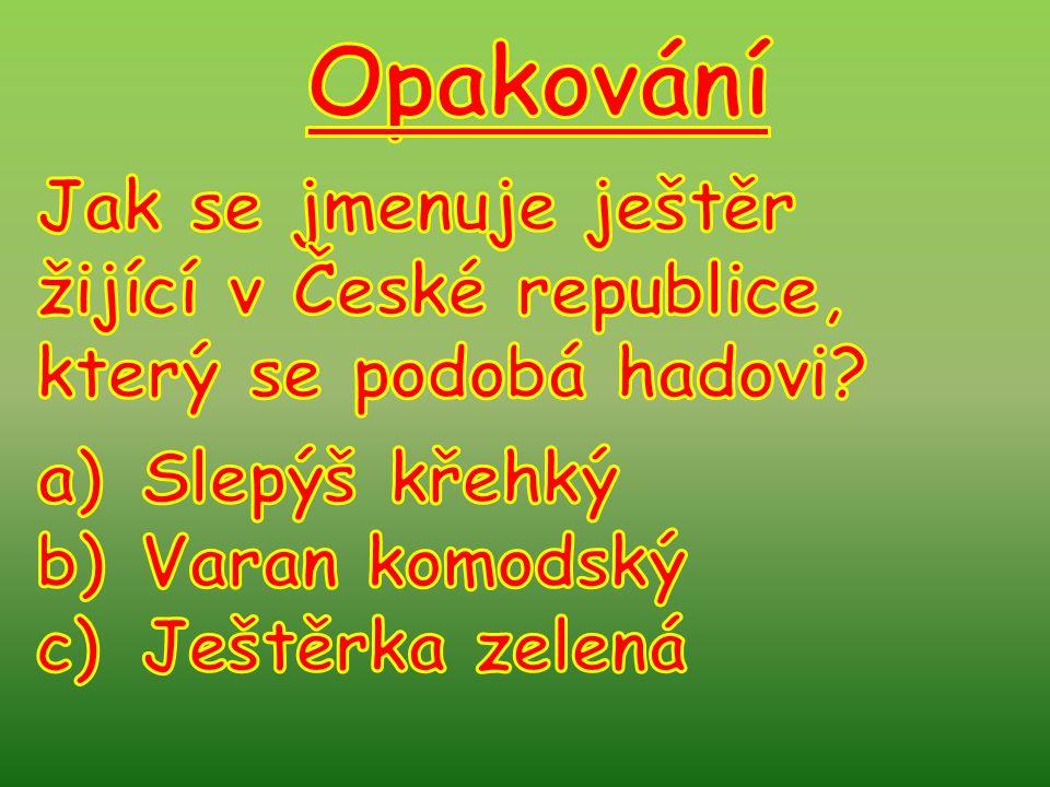 Opakování Jak se jmenuje ještěr žijící v České republice,