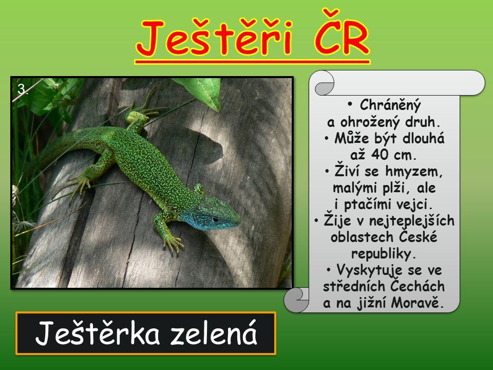 Ještěři ČR Ještěrka zelená Chráněný a ohrožený druh. 3.