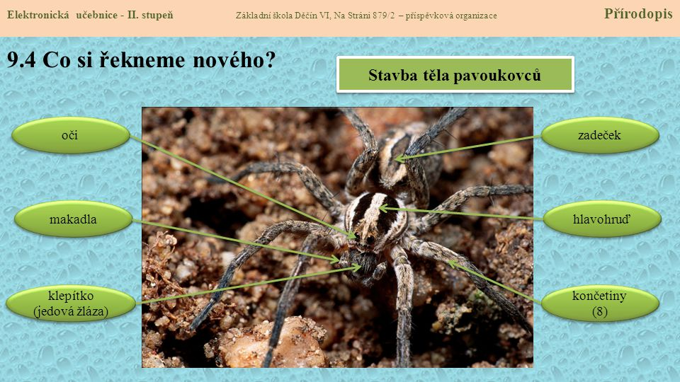 Stavba těla pavoukovců