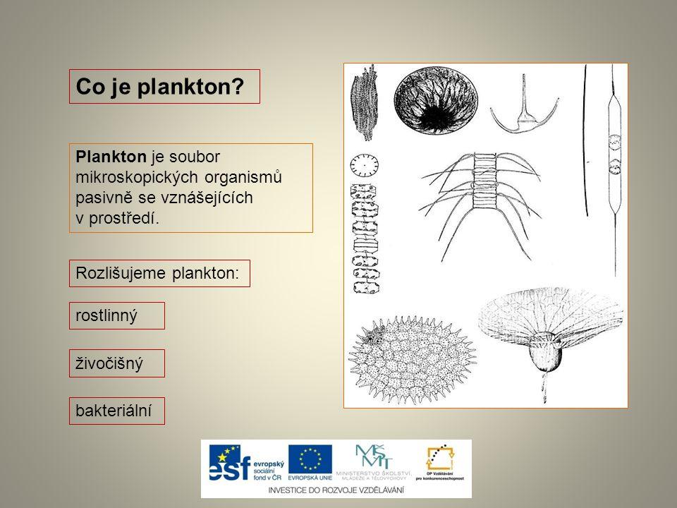 Co je plankton Plankton je soubor mikroskopických organismů