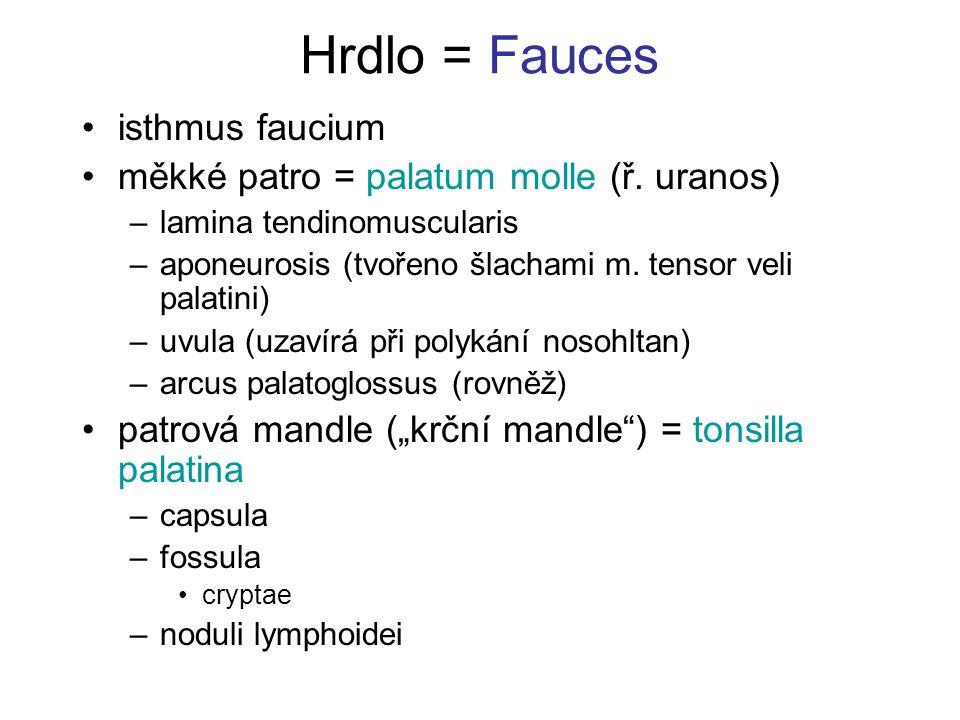 Hrdlo = Fauces isthmus faucium měkké patro = palatum molle (ř. uranos)