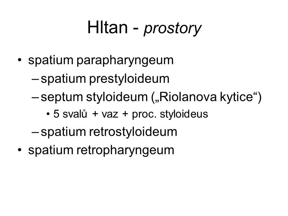 Hltan - prostory spatium parapharyngeum spatium prestyloideum