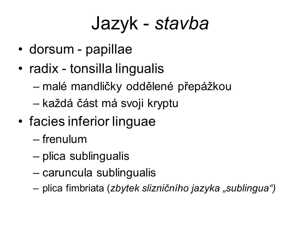 Jazyk - stavba dorsum - papillae radix - tonsilla lingualis