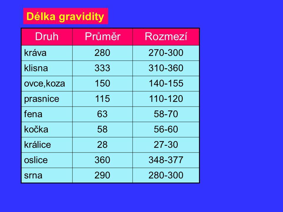Délka gravidity Druh Průměr Rozmezí kráva 280 270-300 klisna 333