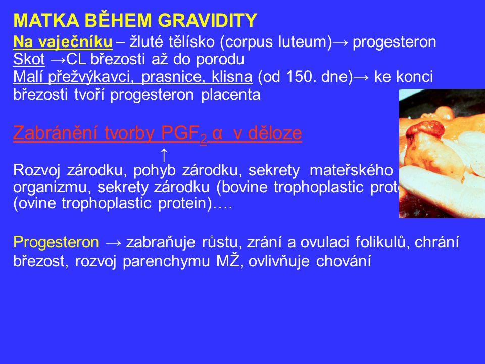 Zabránění tvorby PGF2 α v děloze