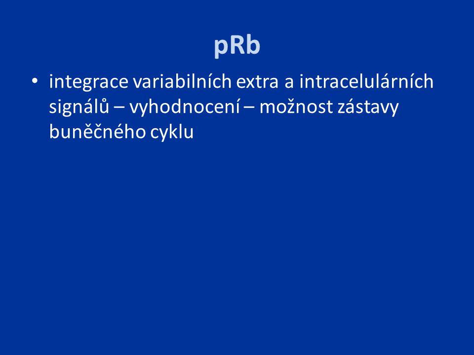 pRb integrace variabilních extra a intracelulárních signálů – vyhodnocení – možnost zástavy buněčného cyklu.