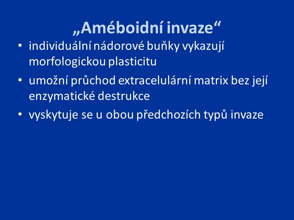 """""""Améboidní invaze individuální nádorové buňky vykazují morfologickou plasticitu."""