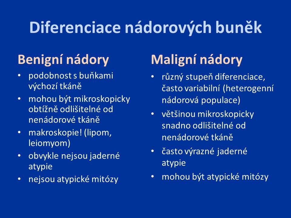 Diferenciace nádorových buněk
