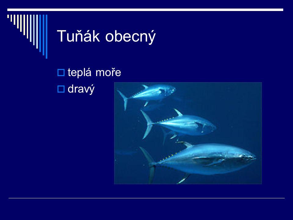 Tuňák obecný teplá moře dravý